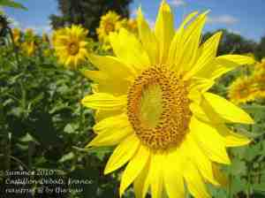 2i. Sunflowers_Castillon-Debats