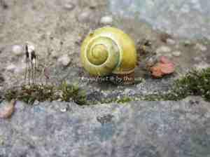 3a. Snails_crawl1
