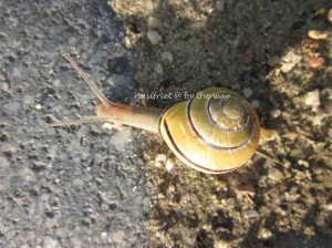 3b. Snails_crawl2