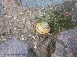 3e. Snails_crawl5