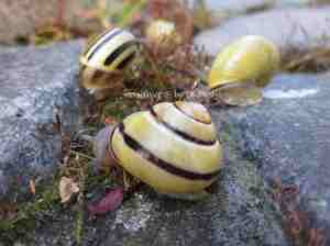 3f. Snails_crawl6