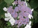 1. Flowerbed13