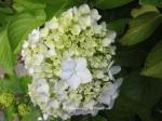1. Flowerbed14