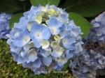 1. Flowerbed15