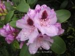 1. Flowerbed17