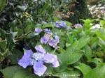 1. Flowerbed2
