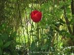 1. Flowerbed3_Tulip