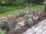 1. Flowerbed4_Roses