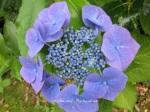 1. Flowerbed5