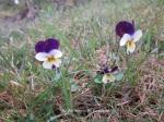 1. Flowerbed9